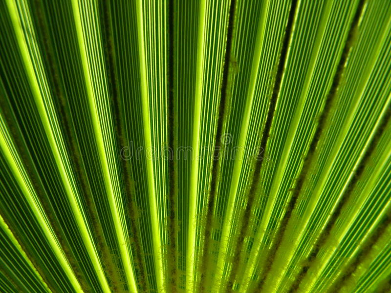 Download Texture of palm leaf stock image. Image of curly, green - 10785773