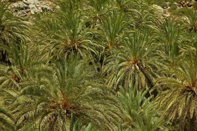 Download Texture of palm trees stock image. Image of leaves, island - 32307829