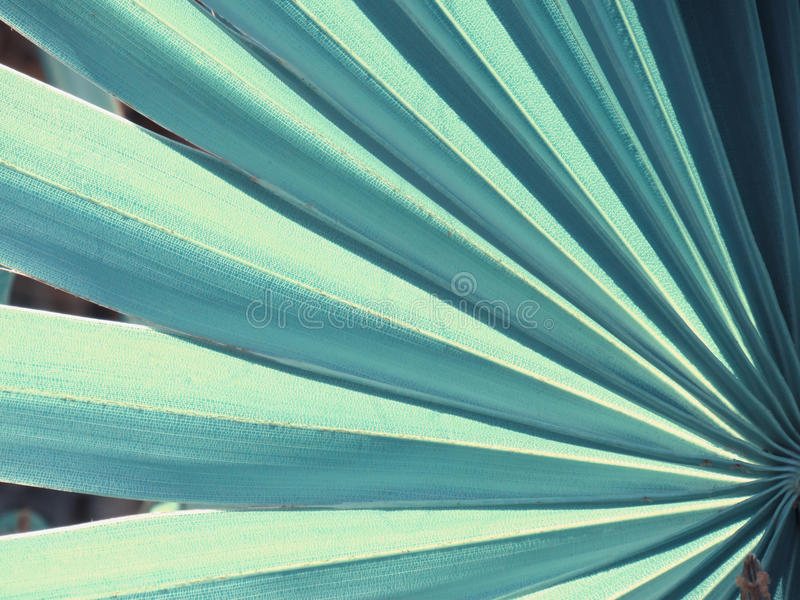 Texture and pattern of a green leaf, vintage style royalty free stock photos