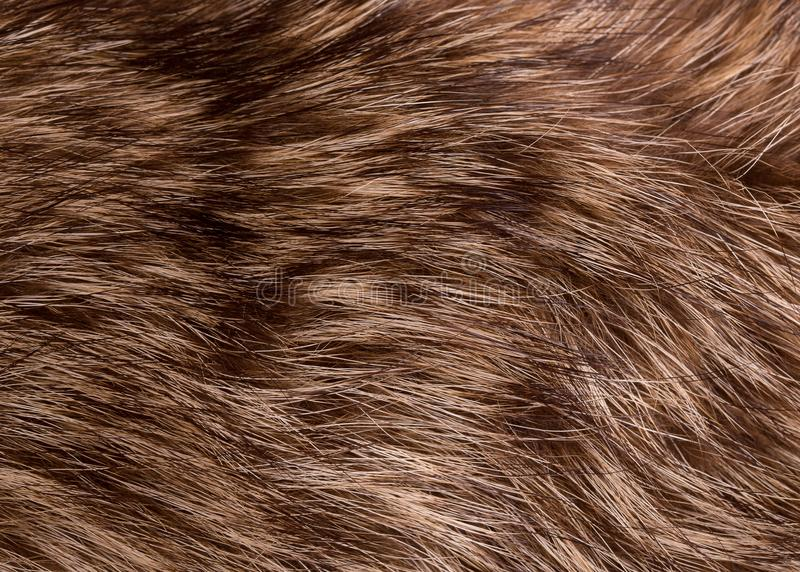 Texture of raccoon fur royalty free stock images