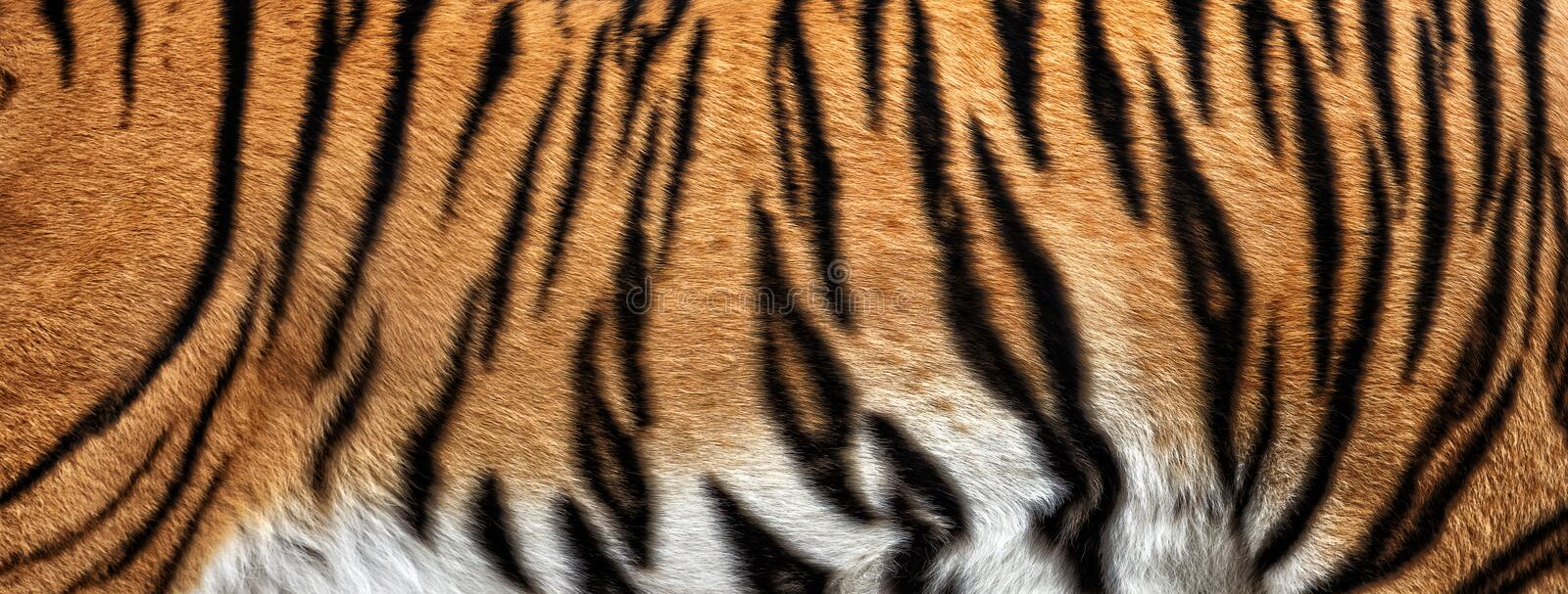 texture of real tiger skin royalty free stock photography