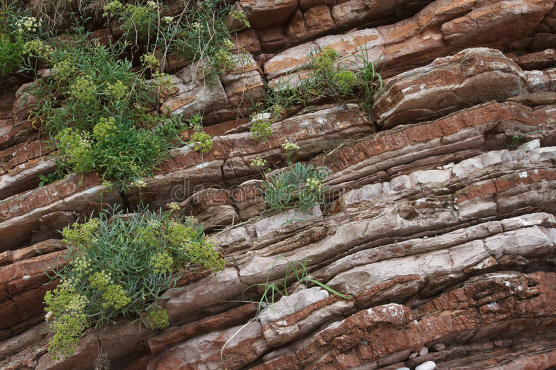 Texture of red rock with growing plants close-up stock images
