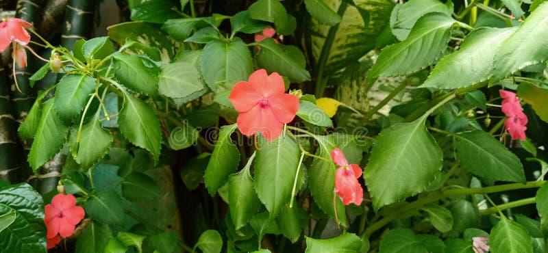 Texture  red wild flower in sunnyday stock photo