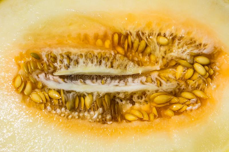 Texture of ripe melon with seeds. Texture of the ripe melon with seeds royalty free stock image