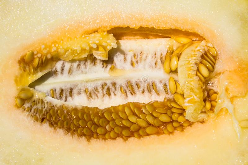 Texture of ripe melon with seeds. Texture of the ripe melon with seeds royalty free stock photography