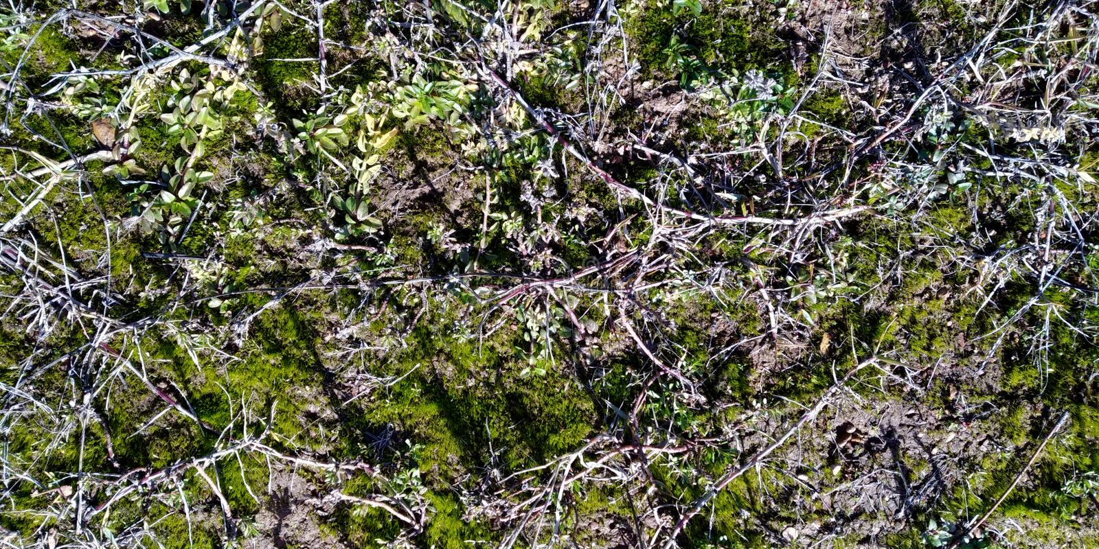Texture of the Rock with Moss. Real Rock with Moss. Texture with herbs. Rocha. Cinza Verde Musgo. Compact Rock stock images