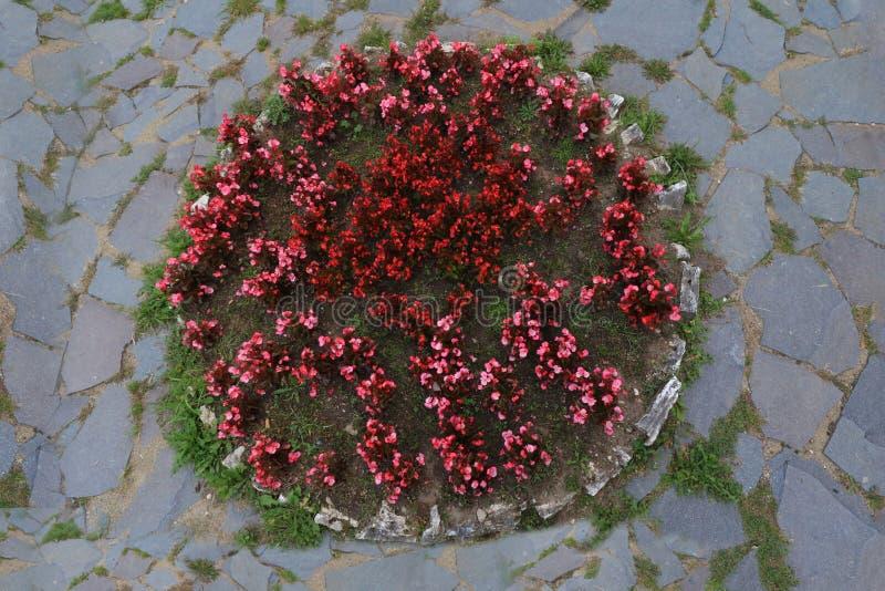 Texture ronde de parterre entourée par le fond en pierre de vue supérieure de trottoir image libre de droits