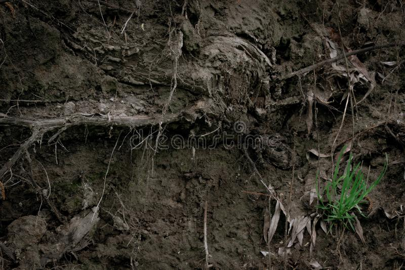 Texture of the roots of an old tree in the ground with green grass and cobwebs. Volume wallpaper royalty free stock photo