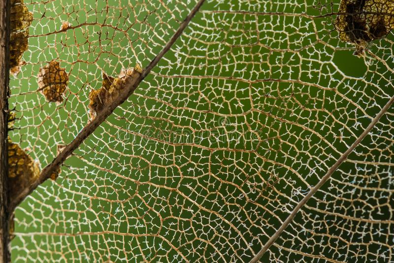 Texture sèche de fond de fibres de feuille photos stock