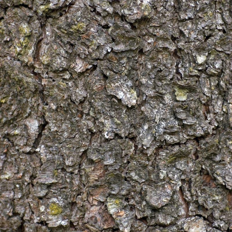 Texture sale d'écorce, modèle texturisé de fond de grand macro plan rapproché détaillé, Brown Grey Taupe images libres de droits