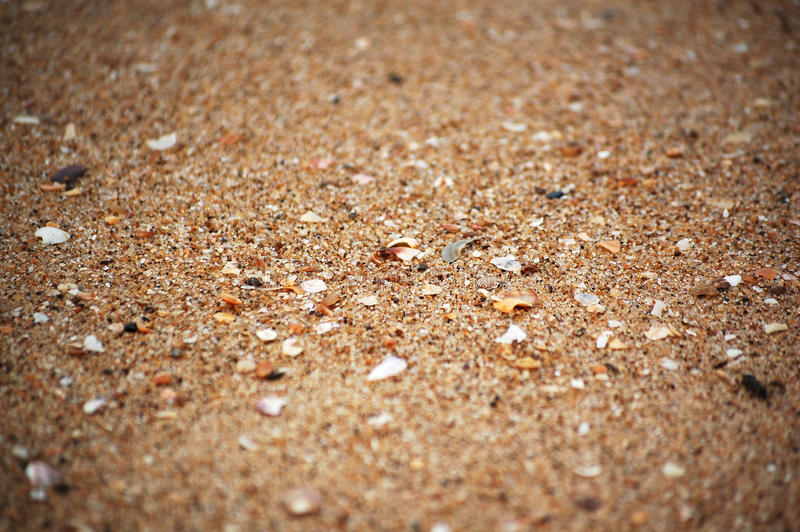 Texture of sand and sea shells (focus middle) stock images