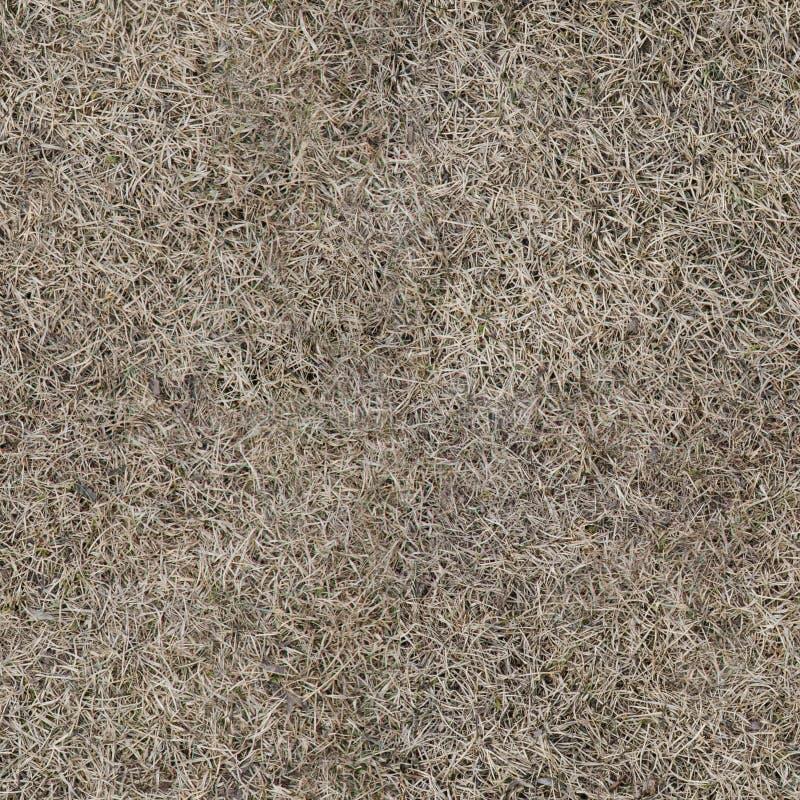 Texture sans couture d'herbe sèche image libre de droits