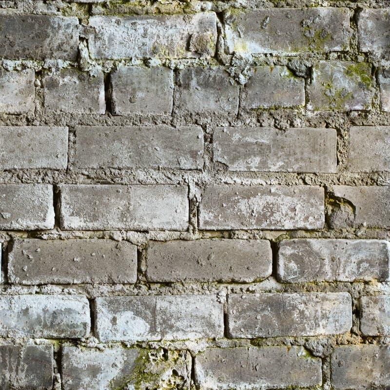 Texture sans joint de mur de briques moisi modifié photos libres de droits