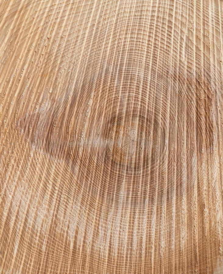 Texture of a sawn tree trunk stock photography