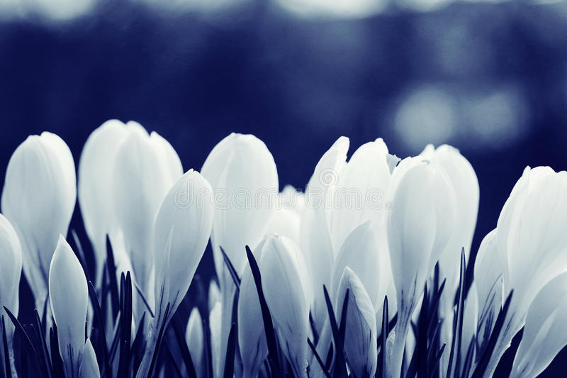 Texture sensible de fleurs photo stock