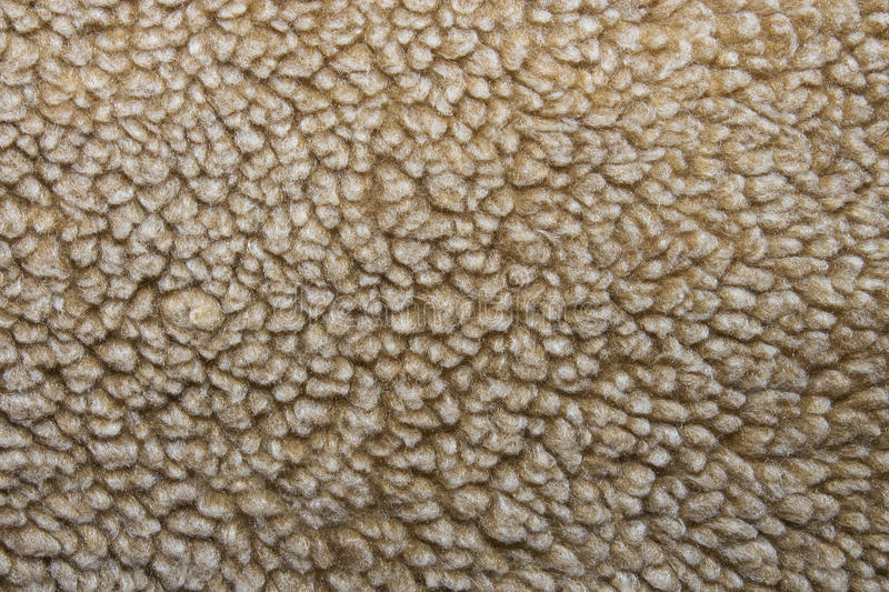 Texture sheep wool stock photography