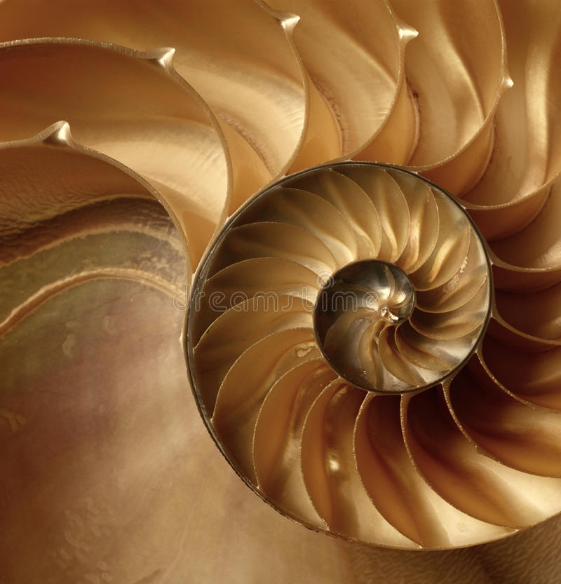 Texture of shell. Natural texture of shell.Nautilus stock photos