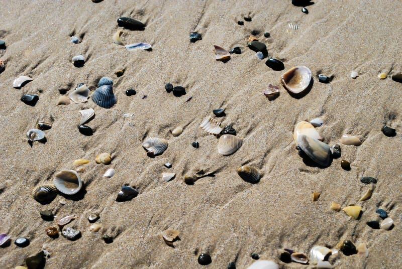 Texture of shells on sandy beach stock photo