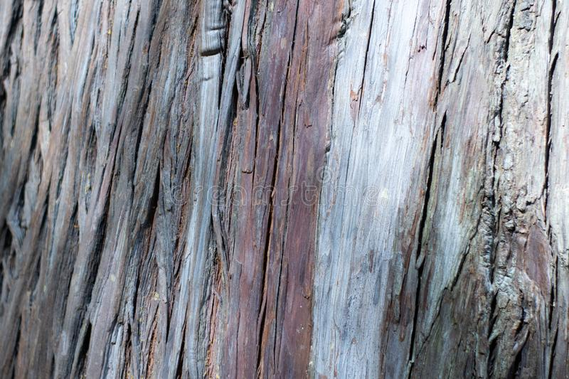 Texture shot of brown tree bark, filling the frame.  stock photo