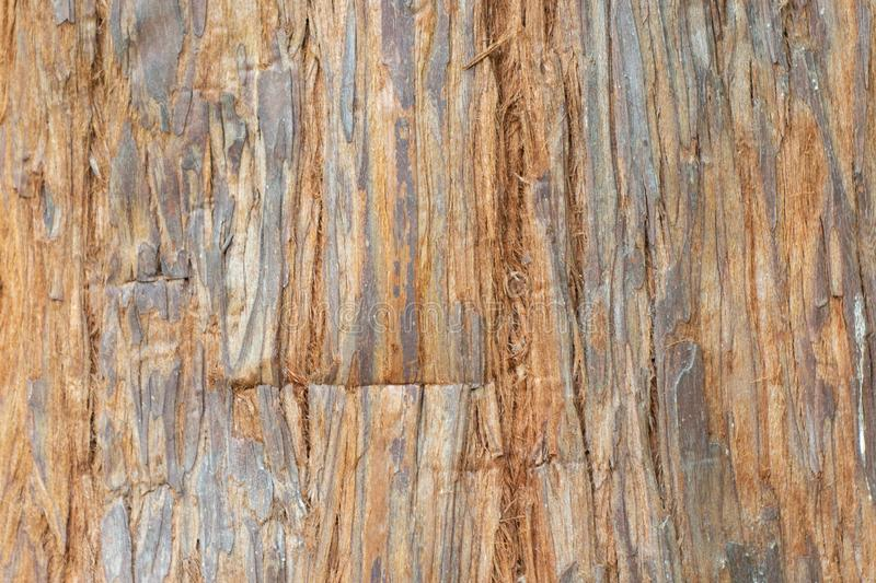 Texture shot of brown tree bark, filling the frame.  royalty free stock photo