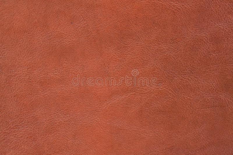 Texture - skin stock photography