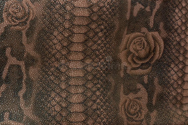 Texture skin of a reptile royalty free stock image