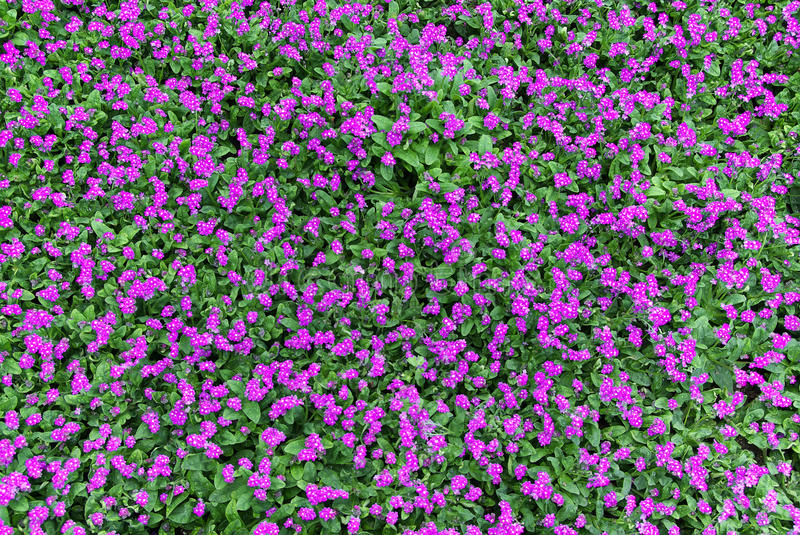 Download Texture from small flower stock image. Image of design - 15576687