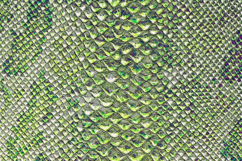 The texture of snake skin. Abstract background stock photo