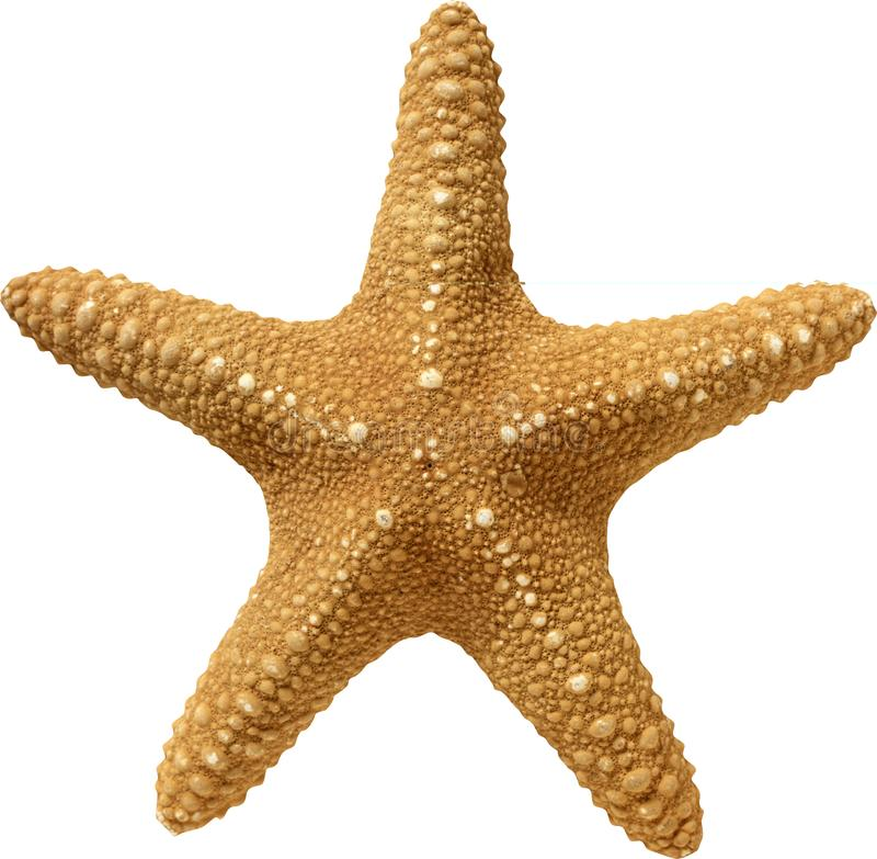 The texture of the starfish beige on a white background royalty free stock photos