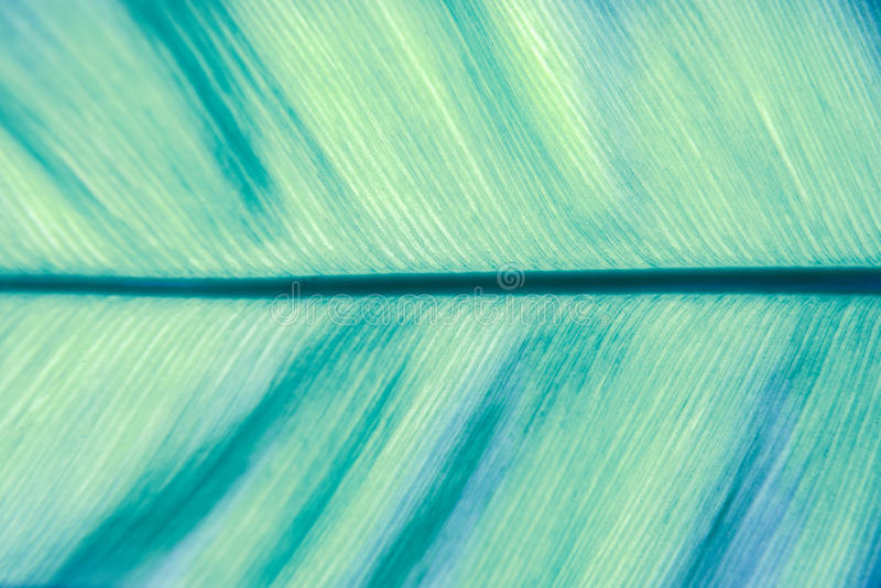 The Texture Of Stem Of Life (blue Leaf) Royalty Free Stock Image