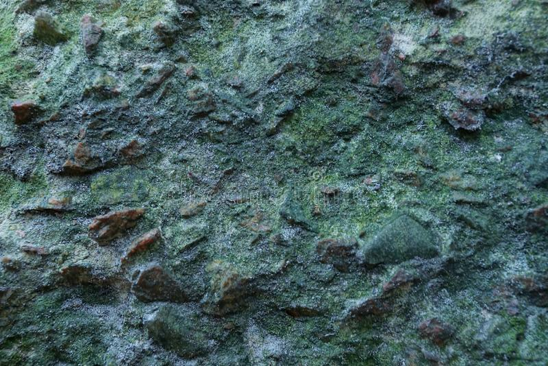 Texture of stone gray concrete green wall stock image