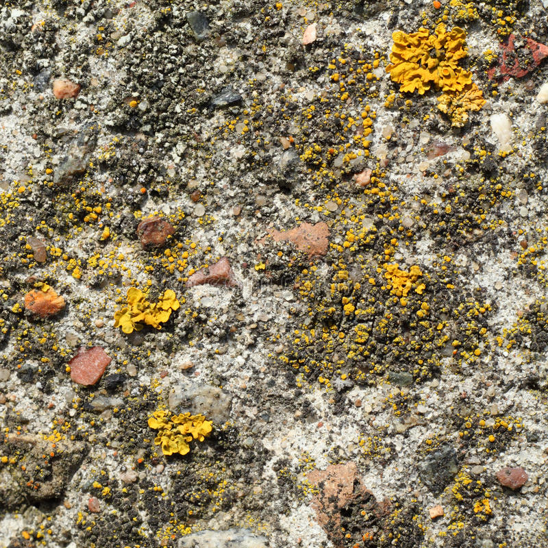 Texture of stone with yellow mushrooms closeup royalty free stock images