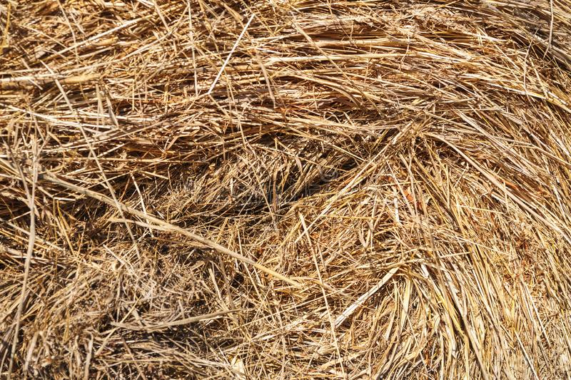 Texture of straw and hay closeup. Stack.  stock photos