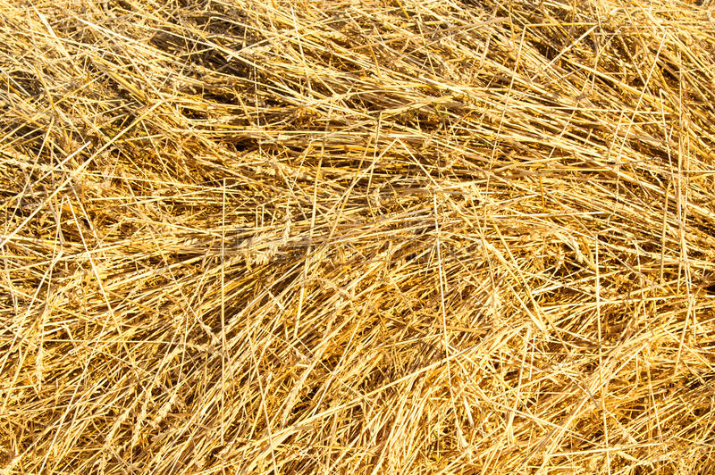 Texture. Straw from wheat beveled stock photos