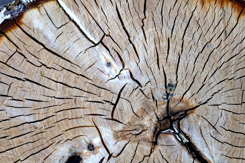 Texture of strongly cracked wood grain old stump for background stock photography