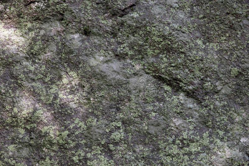 Texture of surface of big wild natural grey stone diabase with green patina and moss and lichen foreground closeup in Crimea stock image