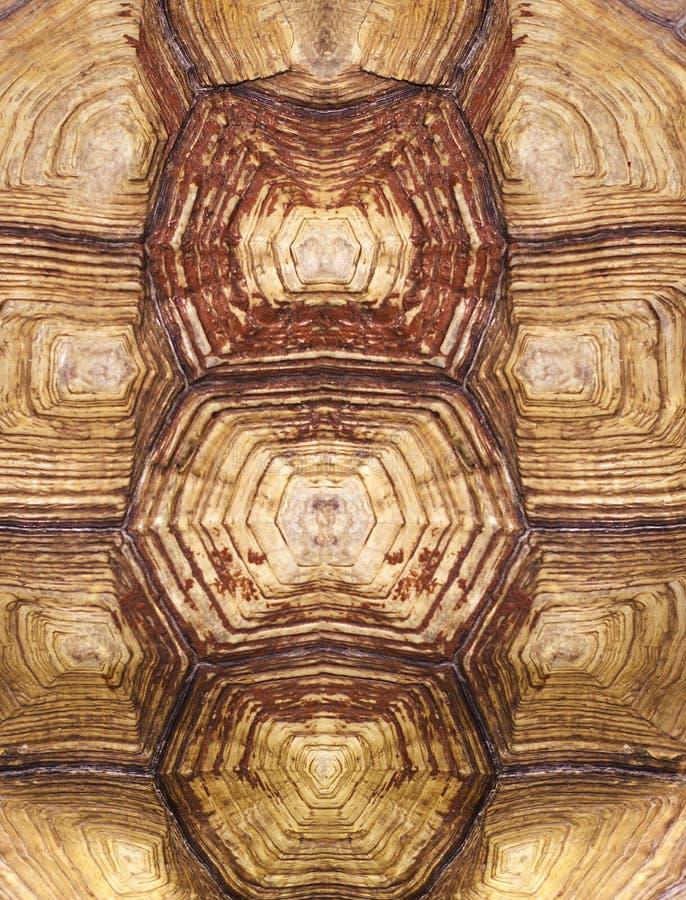 Texture symétrique de coquille de tortue photographie stock libre de droits