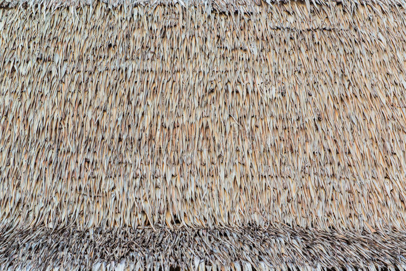 Texture of thatch roof. As a background stock photography
