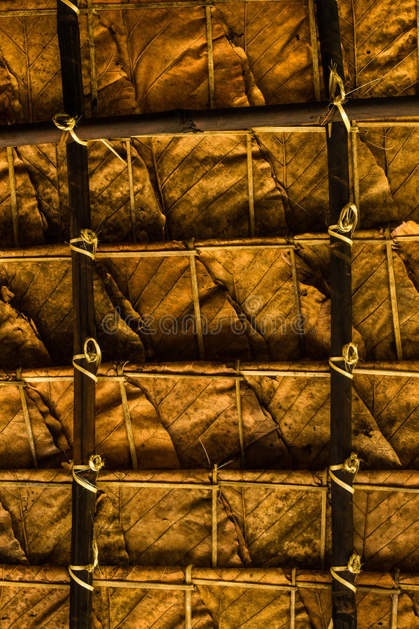 Texture of thatch roof. Close up leaves background. Texture of thatch roof royalty free stock photos