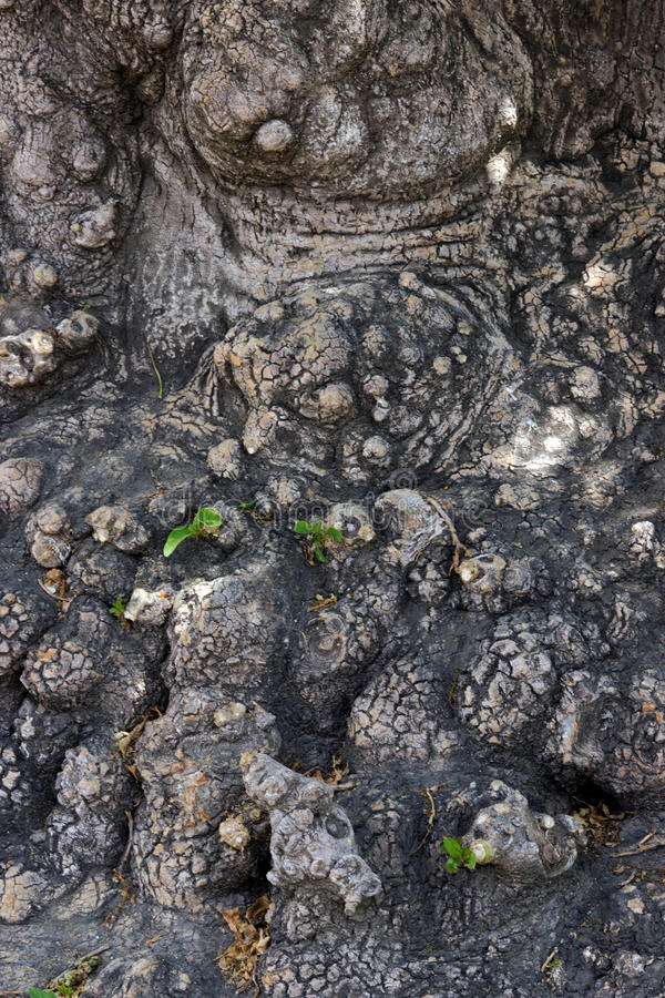 Download Texture tree stock photo. Image of board, background - 28772316