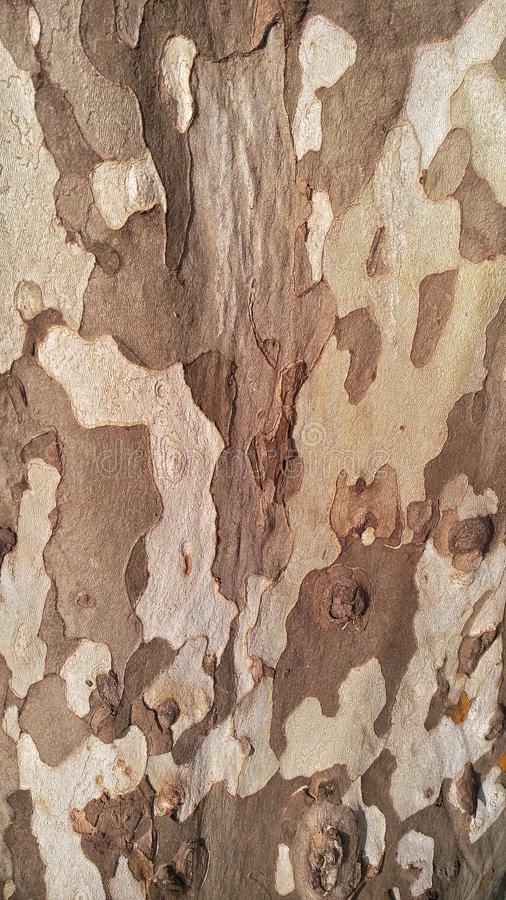 Texture tree bark texture stock photo