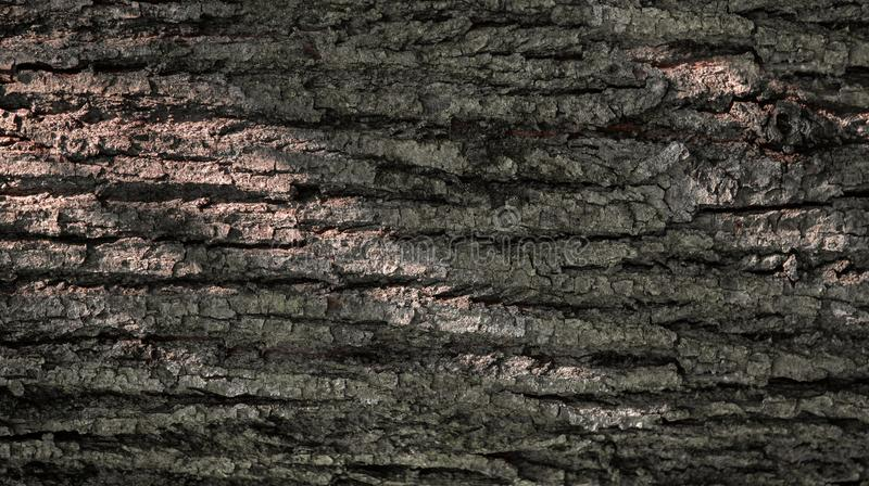 Texture of tree bark. Brown background. Wood industry. Close-up stock photos