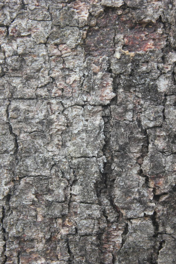 Texture of tree bark. Taken on Bontang, Indonesia royalty free stock image