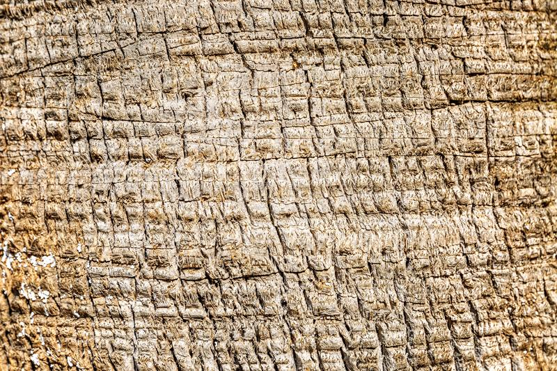 Texture of tree bark. Unusual drawing. Close-up, background. Space for text royalty free stock photography