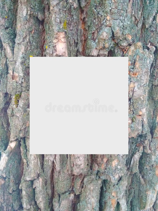Wood texture. Cute branding layout with grey rectangle an intestinal stroke for text or image. Texture of tree bark with various recesses and protrusions stock images