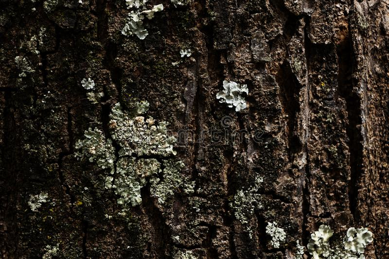 Texture of tree in the foreground with cracks and details stock photography