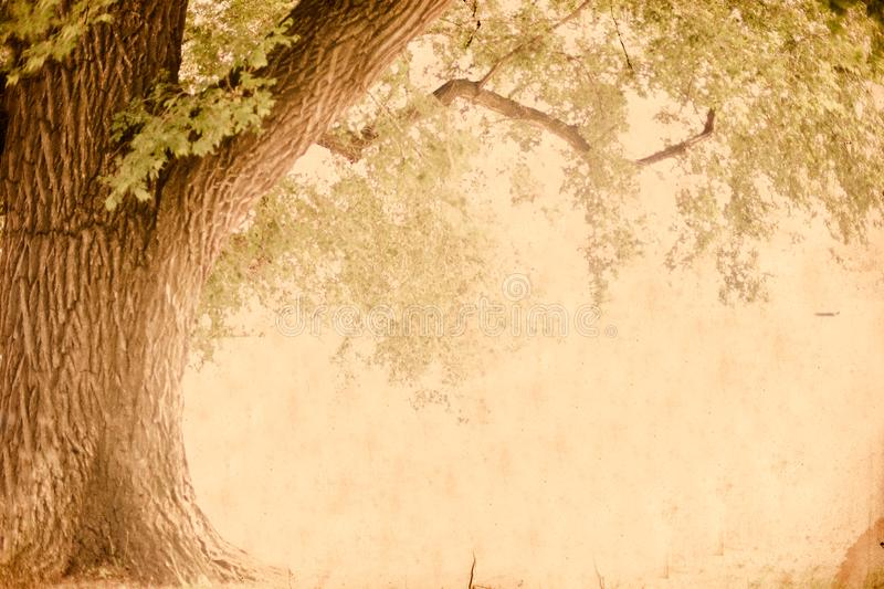 Texture and tree wallpaper image royalty free stock images