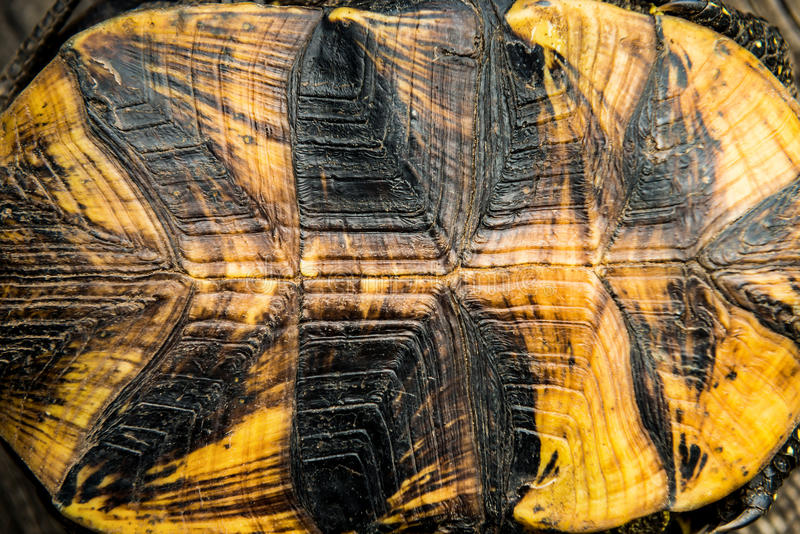 Texture of turtle shell. Can be used for natural background royalty free stock photos
