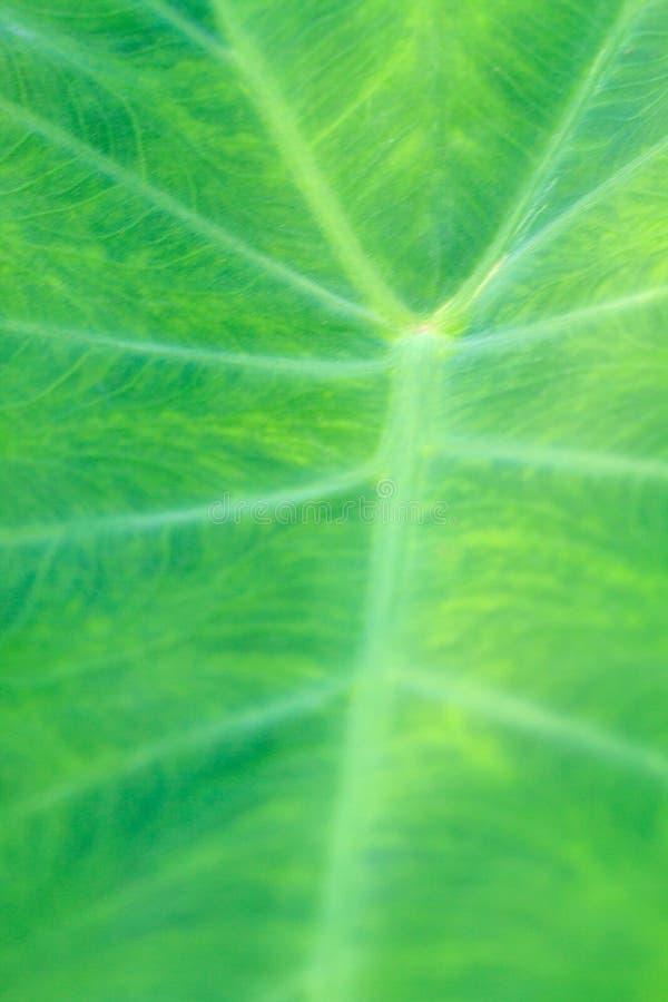 Texture verte abstraite de feuille pour le fond images libres de droits