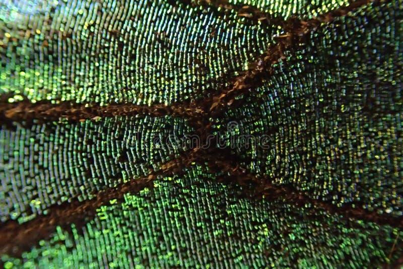 texture verte d'aile de papillon photo stock